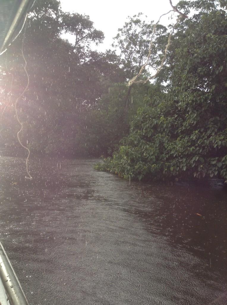 下雨中的熱帶雨林