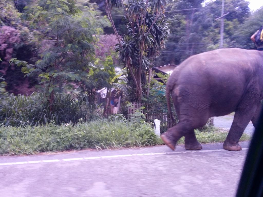 路上看到的大象