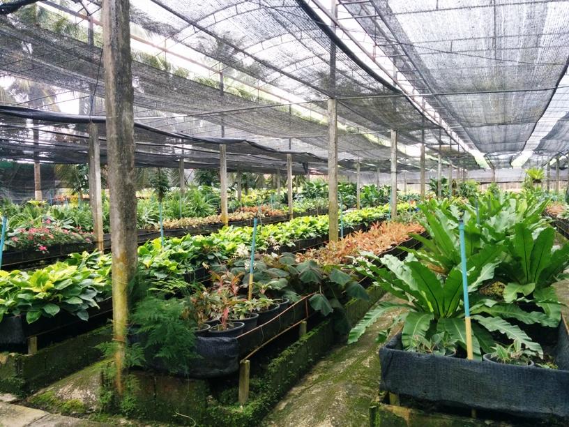 很大的植物園-14