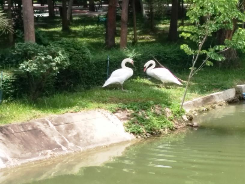 河邊有天鵝-22