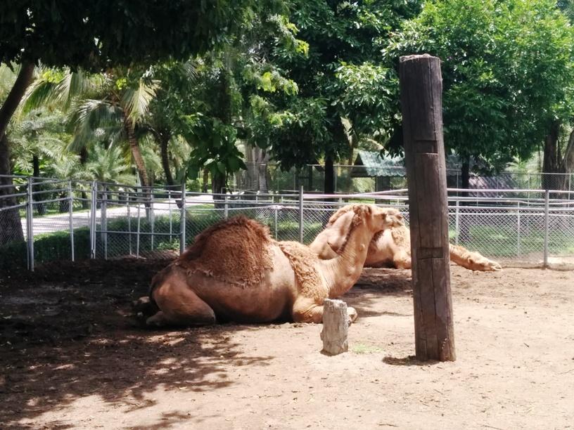 看到駱駝了-17
