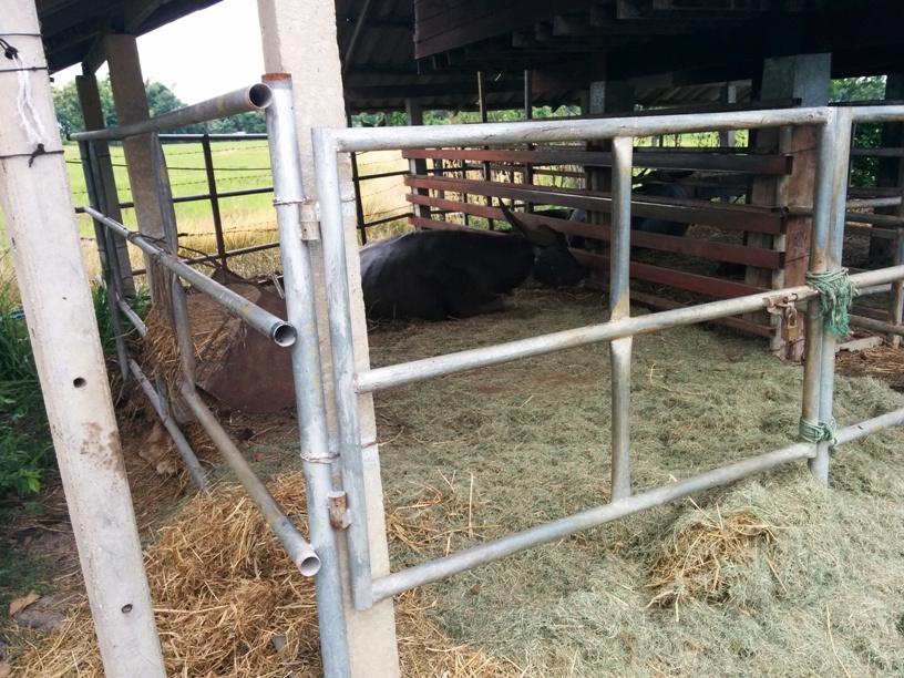 還有牛牛呢-18
