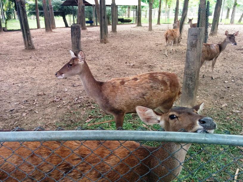 駝鳥園旁邊是鹿-13
