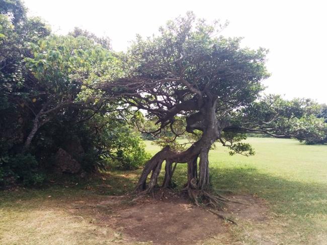 有趣的怪樹