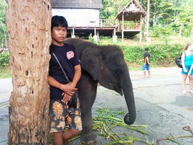 正在狂吃的小象