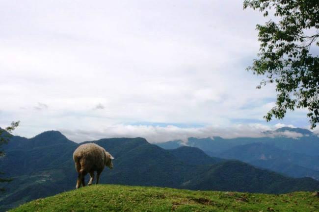 獨孤求敗的羊