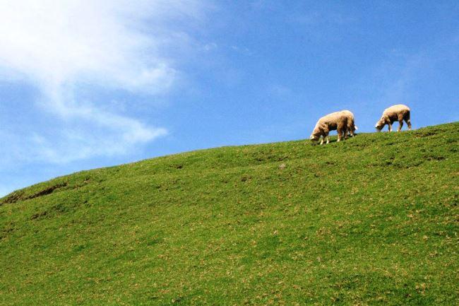 藍天青草地