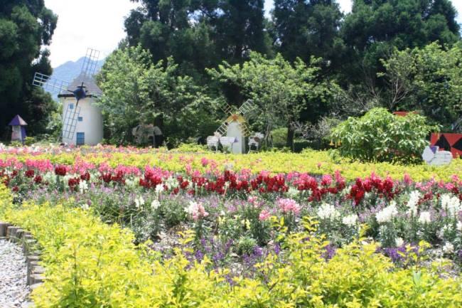 花園植了很多粉色小花