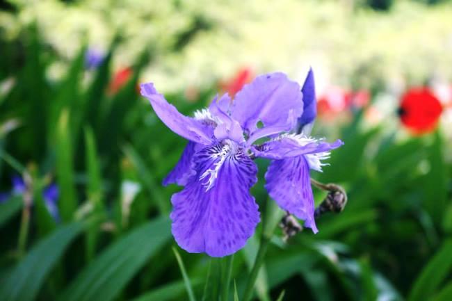 各種花卉的近照1