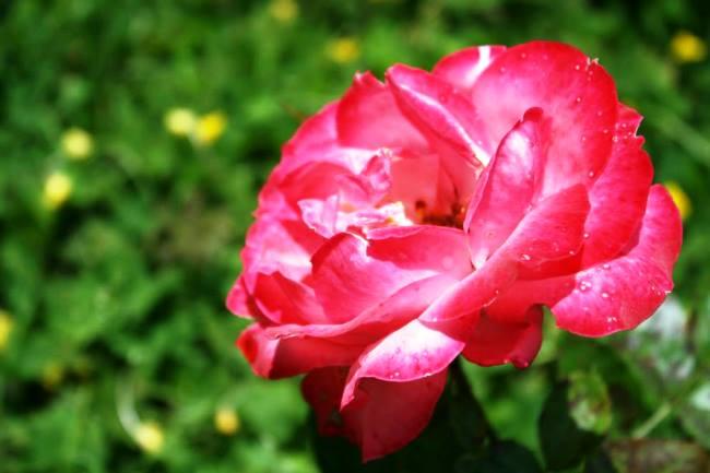 各種花卉的近照2