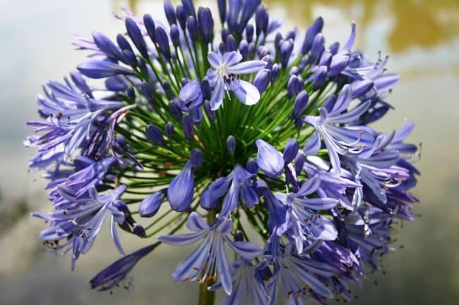 各種花卉的近照3