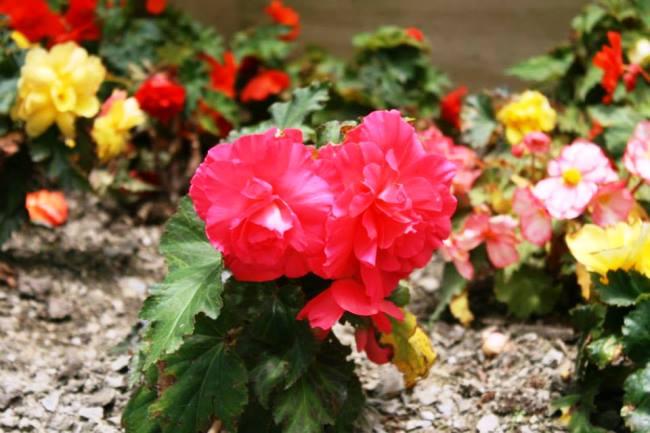各種花卉的近照4