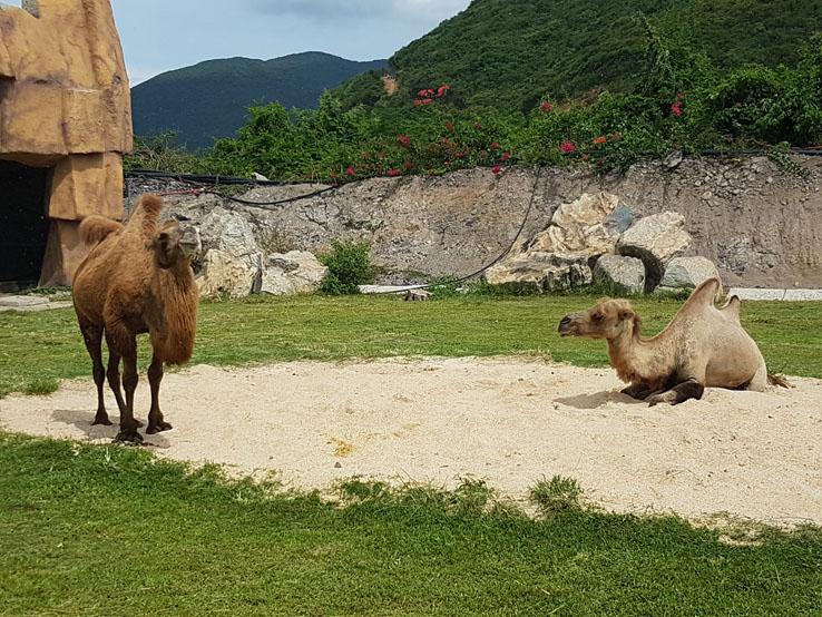 駱駝在hea