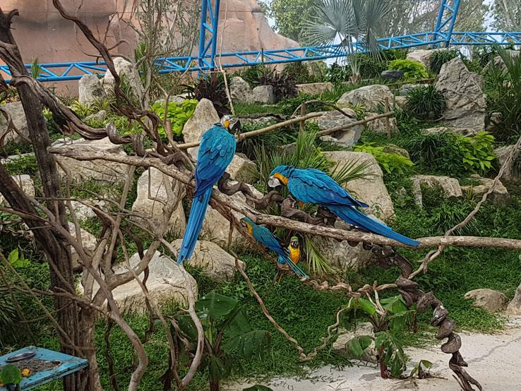 這裡有很多鸚鵡