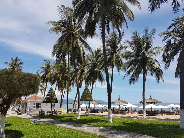很多棕櫚樹