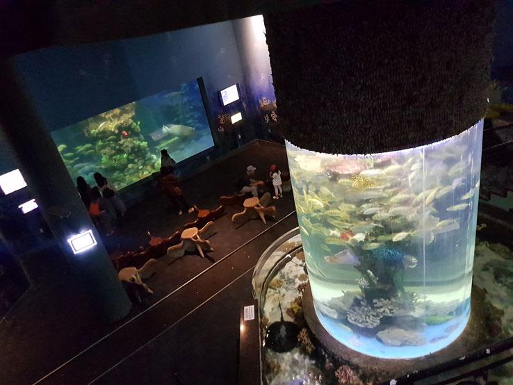 地下水族館