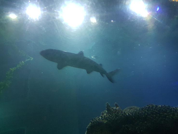 怎少得shark