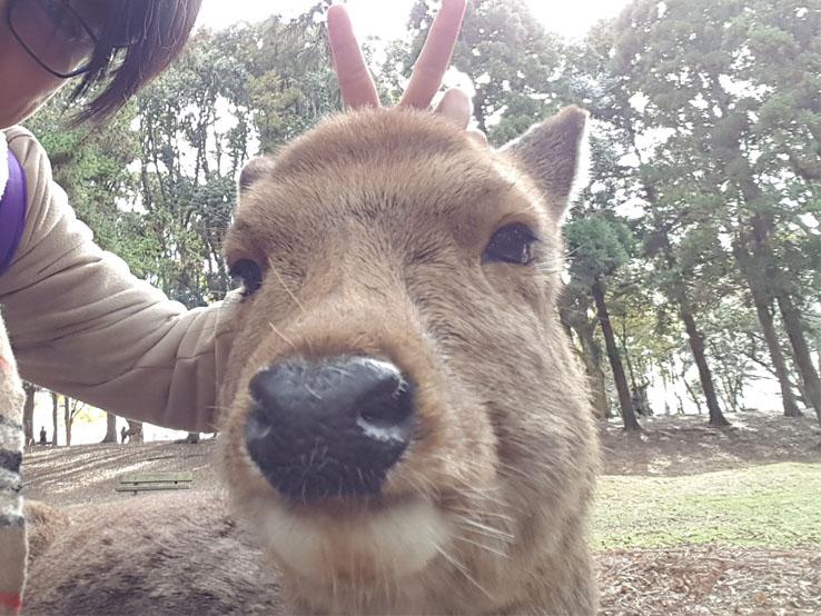 與小鹿自拍