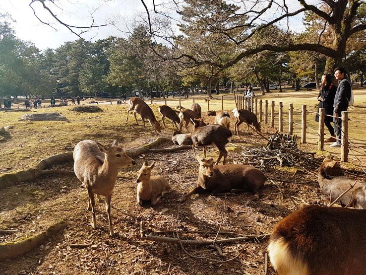 被圍欄圍著的鹿