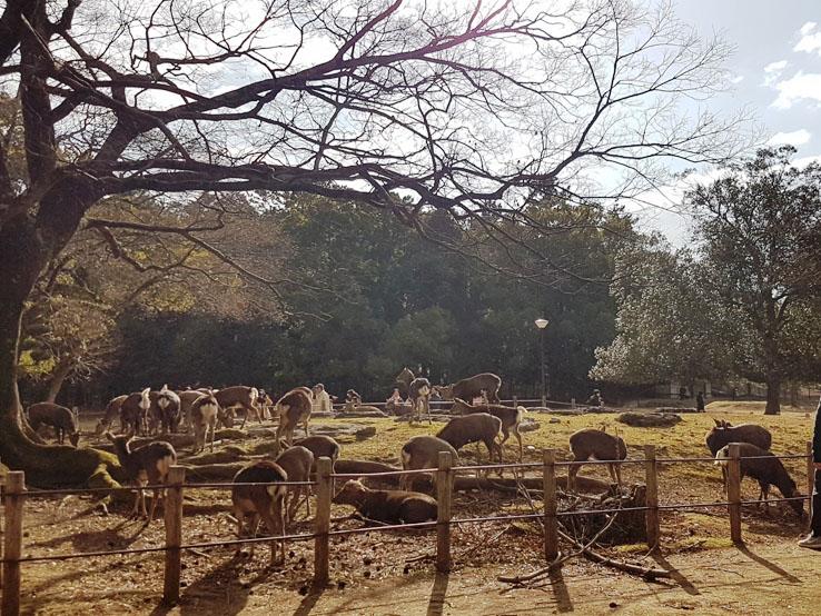被圍欄圍著的鹿3