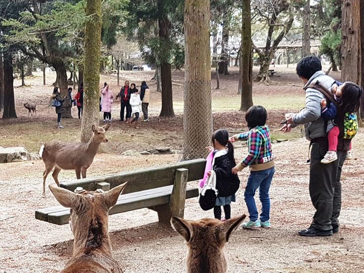 小朋友餵鹿