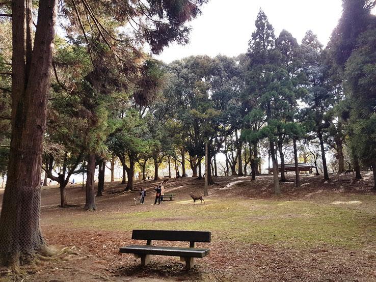 奈良公園畫風不同