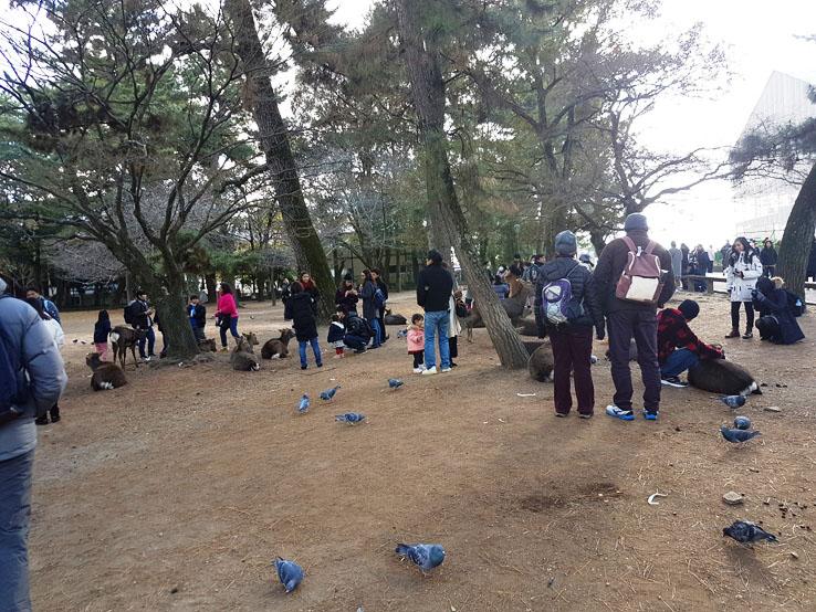 奈良公園門口