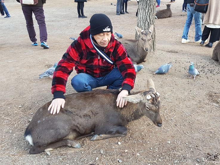日本大叔和鹿