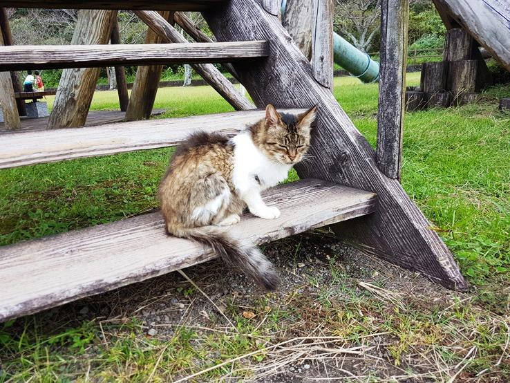 懶洋洋的貓貓